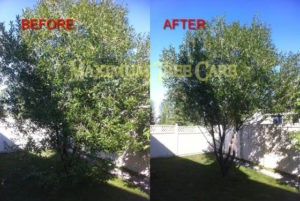 Willow Tree Before & After